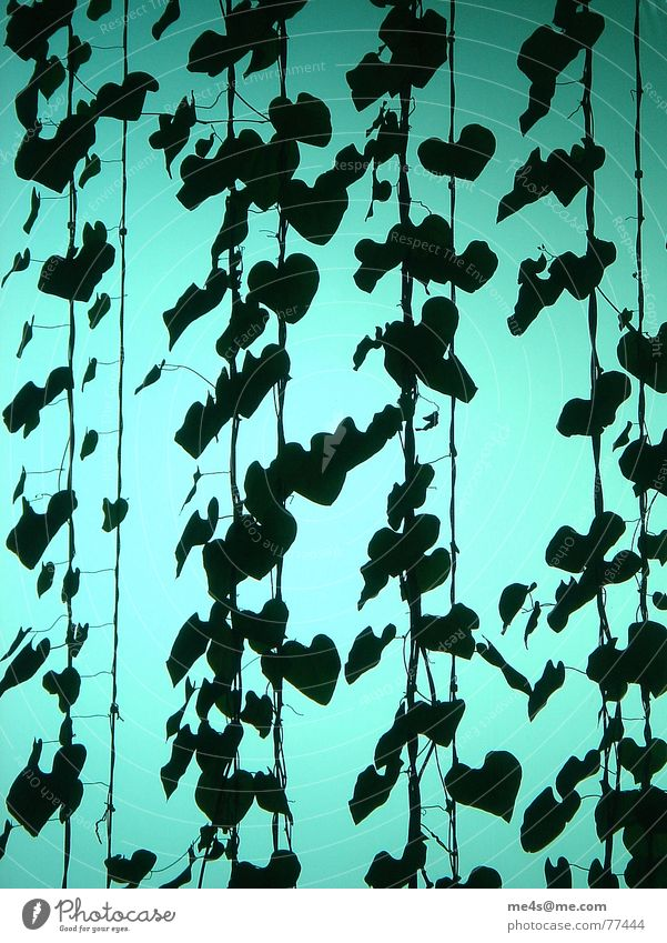 Nature Green Plant Flower Leaf Black Above Interior design Glass Heart Wait Flying Rope Aviation Industry Level