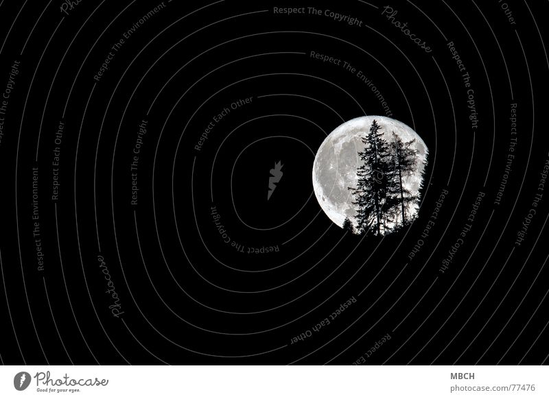Halloween 2 Night Fir tree Tree Dark Lighting Hallowe'en Fascinating Moon Bright gruss