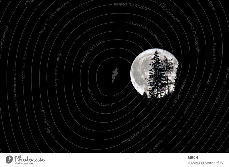 Tree Dark Bright Lighting Fir tree Moon Hallowe'en Fascinating