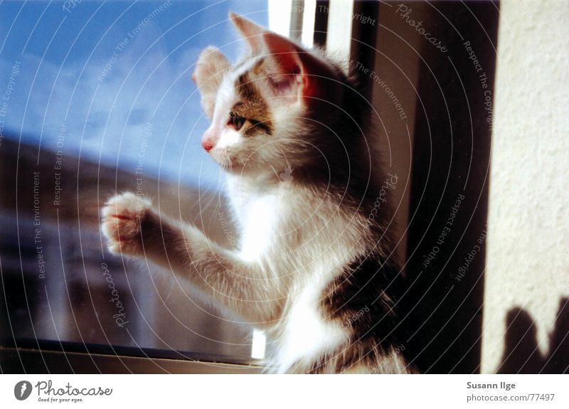 Cat Green Summer Animal Eyes Window Playing Emotions Small Baby animal Power Glass Living or residing Sweet Stripe