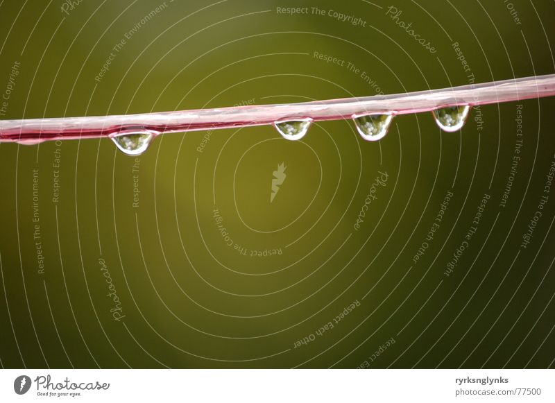 Water Tree Yellow Autumn Rain Drops of water Rope Multiple String 5 Dew Clothesline Outsider