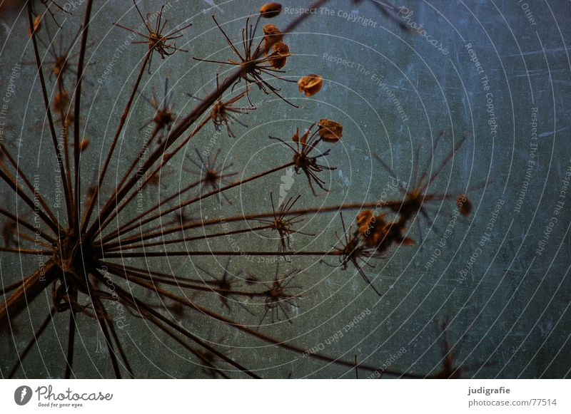 Nature Sky Plant Autumn Death Star (Symbol) End Wild animal Dry Thorny Dried Scratch mark Dill Umbellifer