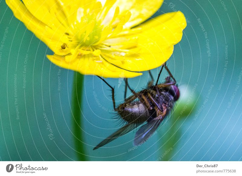 hang out Nature Plant Animal Spring Flower Blossom Wild animal Fly 1 To hold on Hang Wait Colour photo Exterior shot Close-up Macro (Extreme close-up) Day