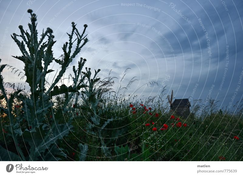 Mühlenweg 1 Nature Landscape Plant Sky Clouds Sunrise Sunset Summer Weather Beautiful weather Grass Meadow Deserted Blue Green Red Windmill thistle Colour photo