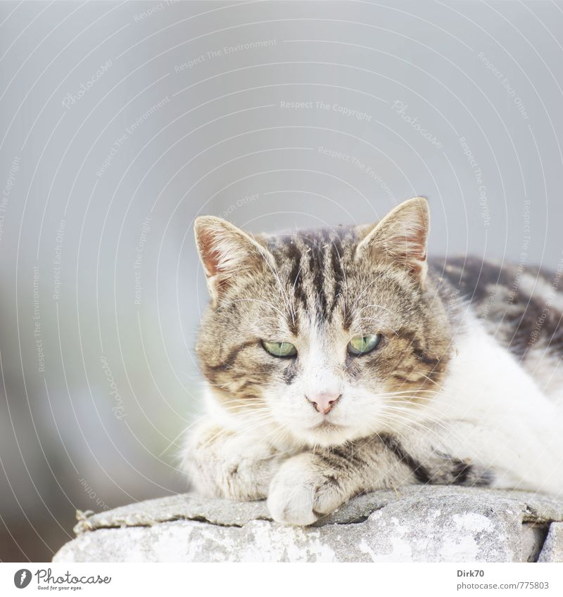 I see your every move ... and I do not approve of it! Istanbul Princes Islands Turkey Asia Wall (barrier) Wall (building) Pet Cat 1 Animal Stone Observe Lie