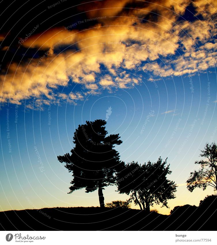 Nature Sky Tree Calm Clouds Loneliness Life Dark Relaxation Autumn Dream Landscape Orange Horizon Romance Peace