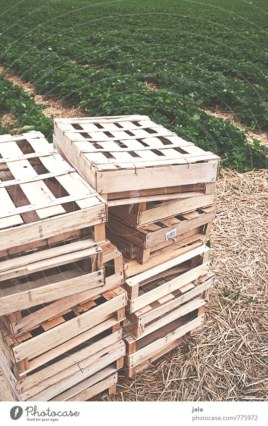 crates Work and employment Agriculture Forestry Nature Landscape Plant Foliage plant Agricultural crop Strawberry Field Crate Box of fruit Stack Natural