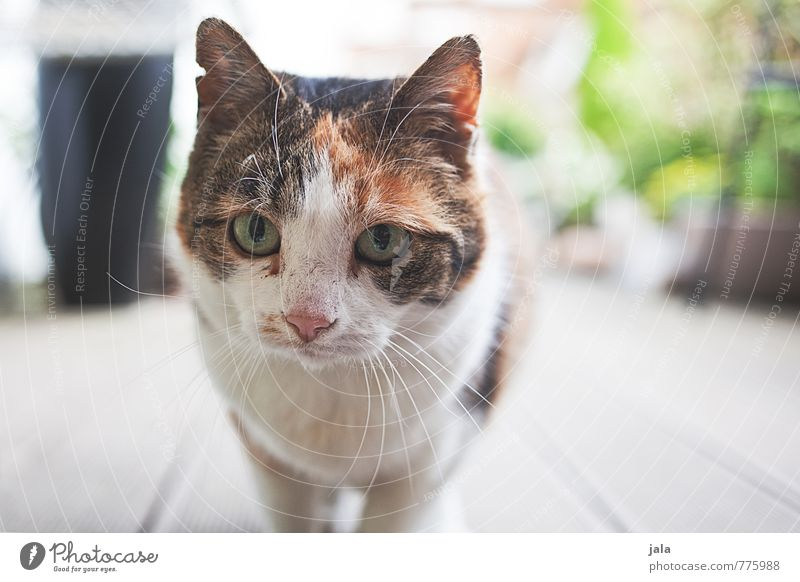 ^^ Animal Pet Cat Animal face 1 Beautiful Colour photo Exterior shot Deserted Day Animal portrait Looking Looking into the camera Forward
