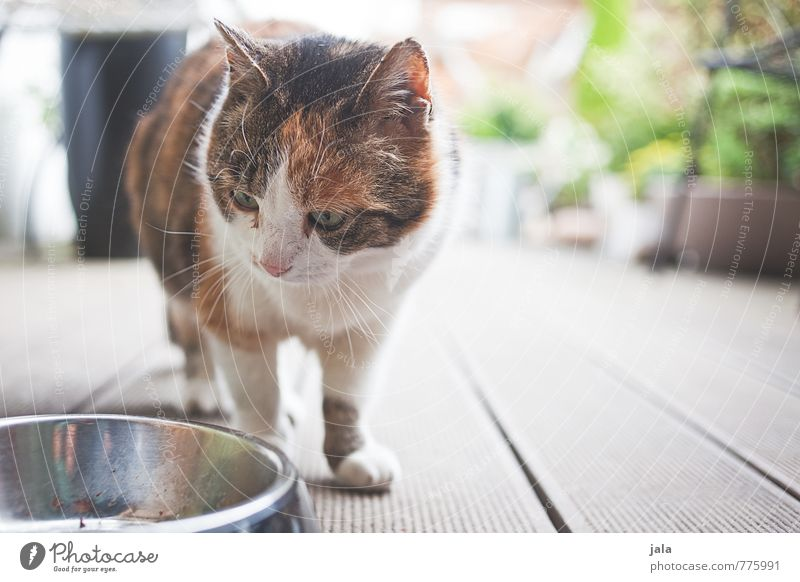 hunger Animal Pet Cat 1 Food bowl Looking Appetite Colour photo Exterior shot Deserted Day Animal portrait Looking away