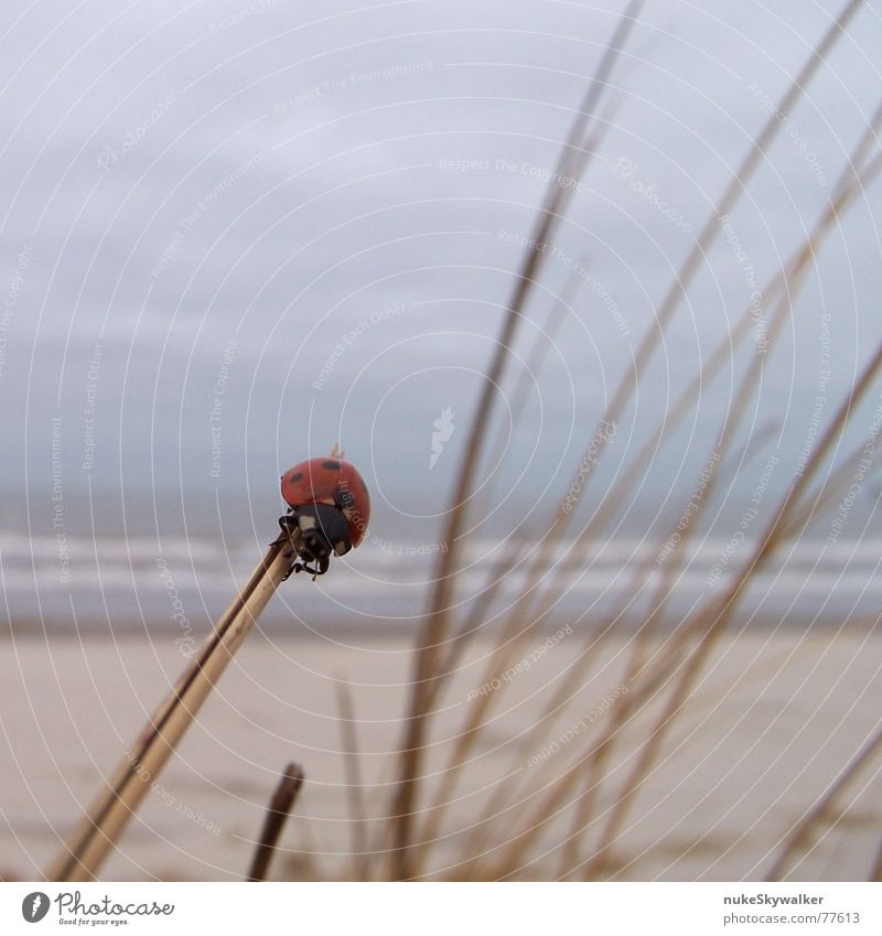 Ocean Beach Clouds Coast To hold on Passion Beach dune North Sea Doomed Ladybird Beetle Departure Bad weather Ameland Good luck charm Reckless