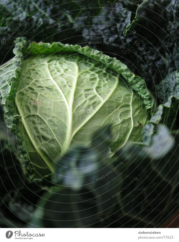 Season vegetables Foliage plant Vitamin-rich Nutrition White cabbage Vegetable bed Agriculture Fresh Green Plant Food Life Harvest Vegetable garden Raw