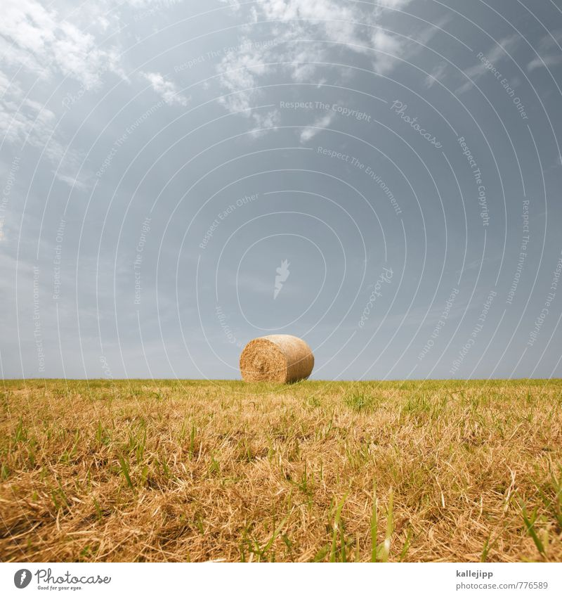 Nature Plant Heaven Landscape Animal Environment Horizon Field Success Round Agriculture Harvest Economy Sustainability Forestry Coil