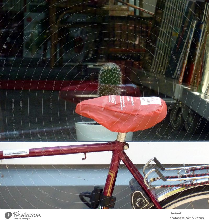 Ouch! Shop window Bicycle Saddle Bicycle frame luggage carrier Cactus Thorn Book Driving To enjoy Sit Threat Funny Point Thorny Red Joy Surprise Pain Horror