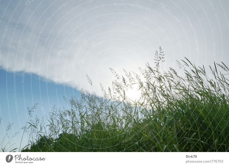 Nature Blue Plant Green White Summer Sun Clouds Environment Life Meadow Grass Natural Gray Bright Growth