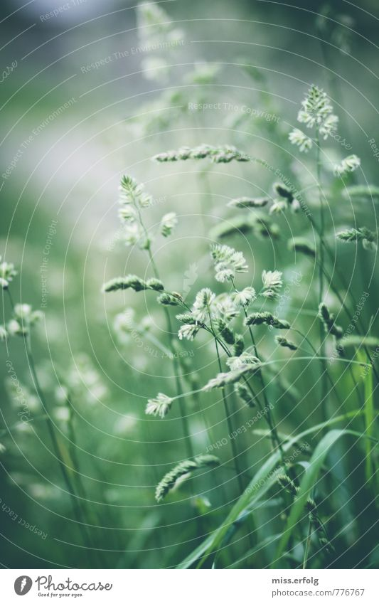 Greenery II Environment Nature Animal Plant Foliage plant Wild plant Garden Meadow Field Growth Esthetic Fresh Healthy Spring fever Power Idyll Climate