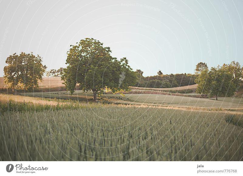 landscape Environment Nature Landscape Plant Sky Tree Grass Bushes Foliage plant Agricultural crop Wild plant Field Hill Natural Colour photo Exterior shot