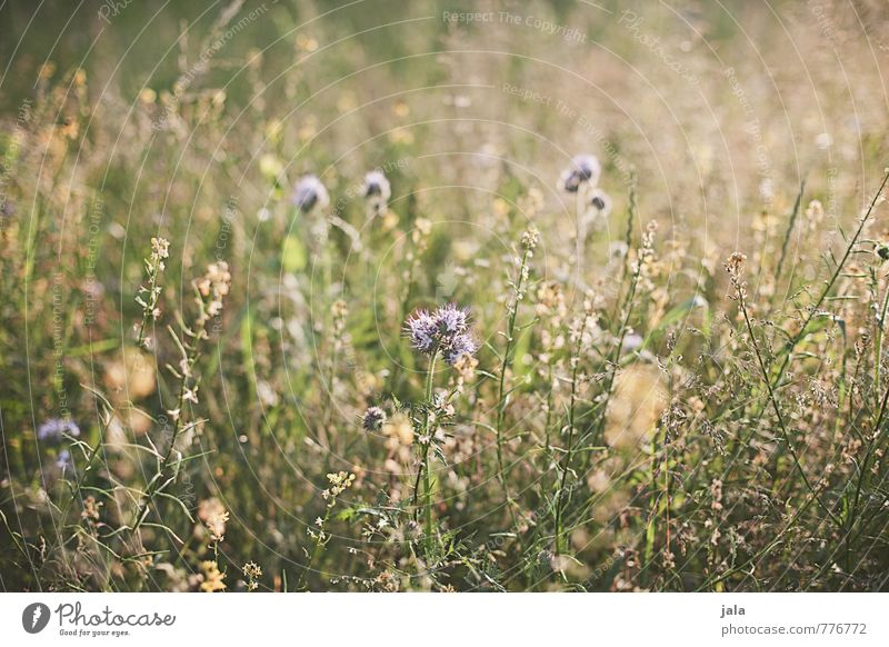 Nature Beautiful Plant Summer Flower Environment Meadow Grass Natural Wild Esthetic Friendliness Wild plant
