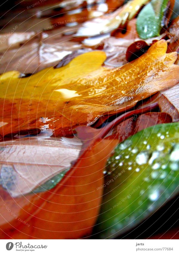 The last foliage Autumn Leaf Multicoloured Wet Water Drops of water Colour jarts