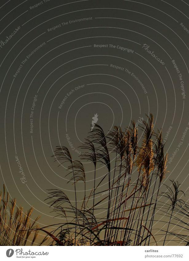Sky Autumn Grass Playing Wind Garden plot Direction Blow Bend Compost Colour error Feng Shui