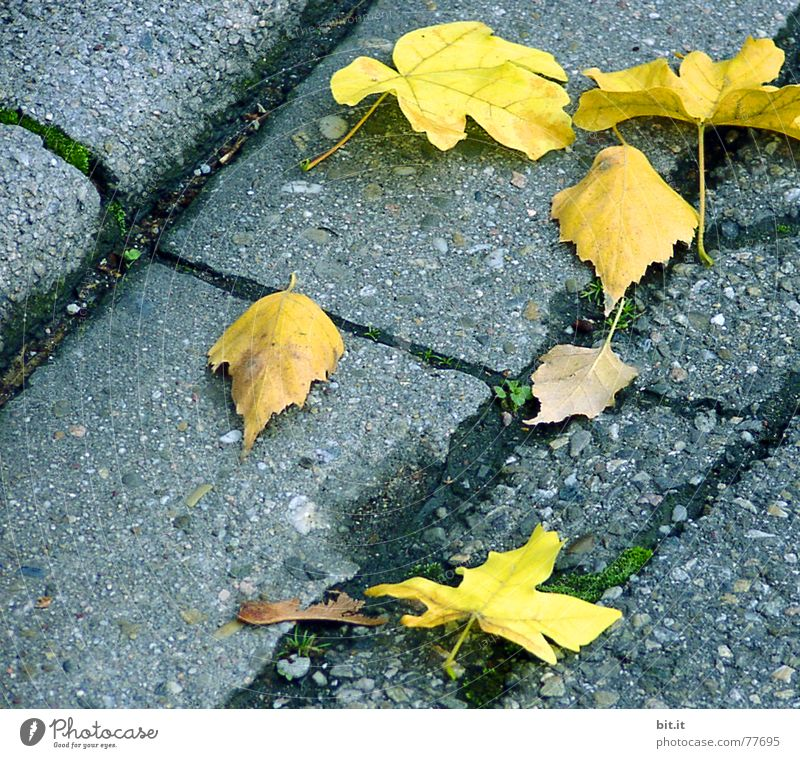 Leaf Yellow Street Autumn Gray Park Environment Places Broken Lie Asphalt Natural Illuminate Sidewalk Traffic infrastructure Moss