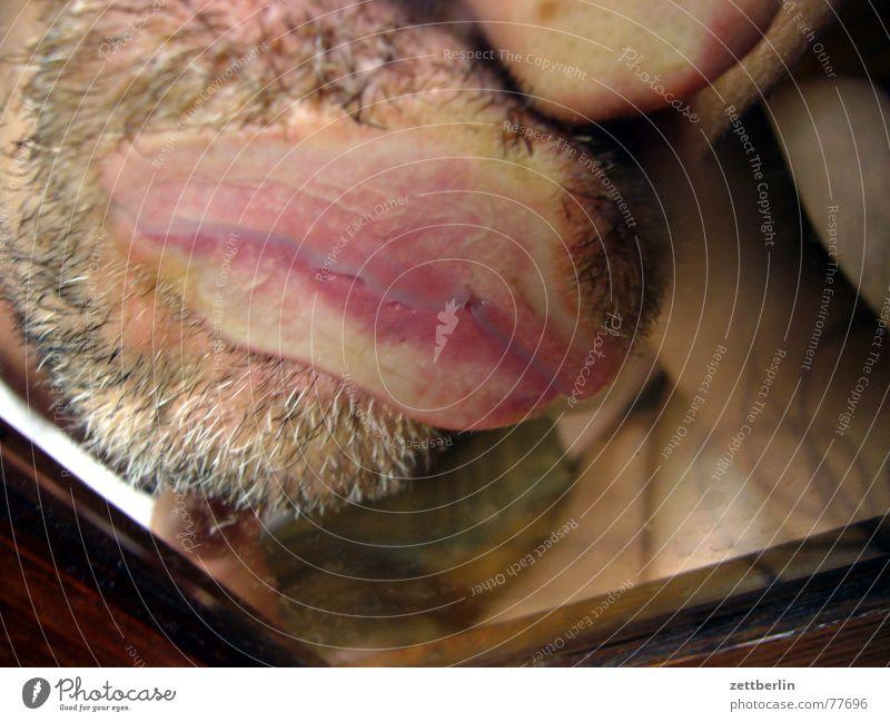 Human being Glass Pink Mouth Window Lips Kissing Mirror To enjoy Facial hair Window pane Snail Light Reflection Animal Amazed