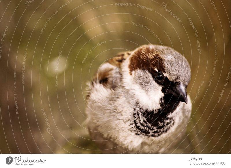 The rogue Sparrow Wisdom Curiosity Bird Joy mischievous Erudite Clean