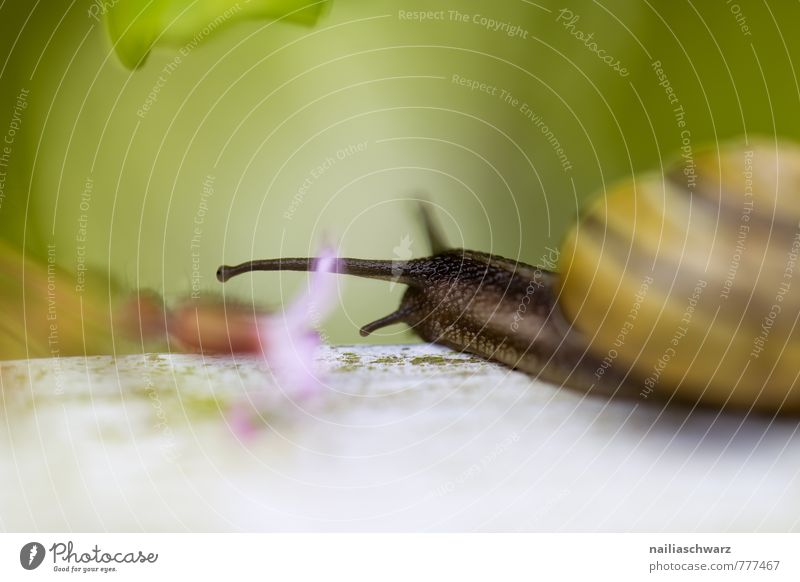 garden snail Summer Environment Nature Plant Animal Spring Flower Garden Park Snail 1 Movement Discover Crawl Happiness Beautiful Natural Curiosity Cute Slimy