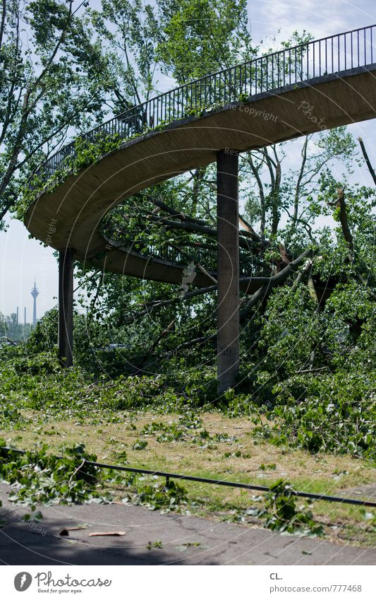 After the storm Environment Nature Landscape Summer Climate Climate change Weather Storm Wind Gale Tree Duesseldorf Town Bridge Manmade structures Transport