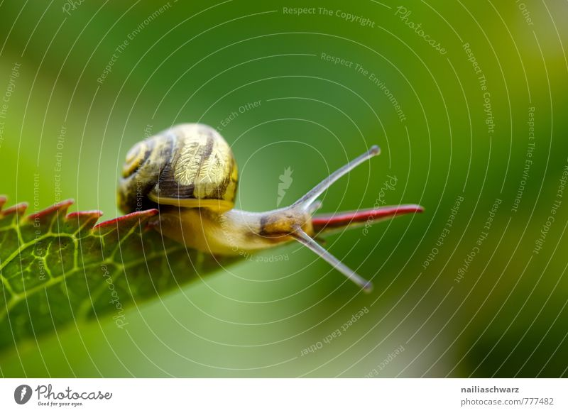 snail Summer Environment Nature Plant Animal Spring Leaf Snail 1 Observe To feed Crawl Walking Simple Happiness Natural Curiosity Cute Positive Slimy Beautiful