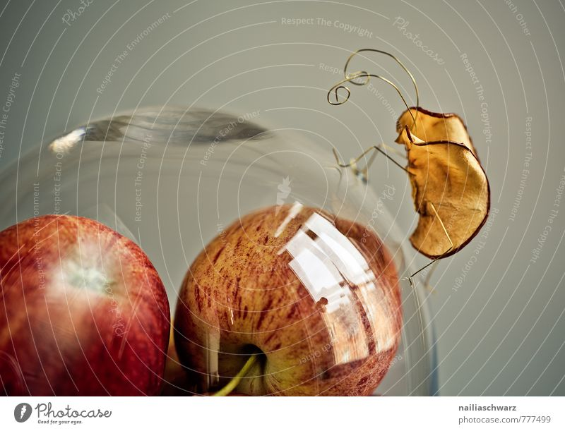 apple beetle Food Apple Nutrition Organic produce Vegetarian diet Diet Bowl Dome Observe Crawl Exceptional Happiness Fresh Healthy Cute Beautiful Red
