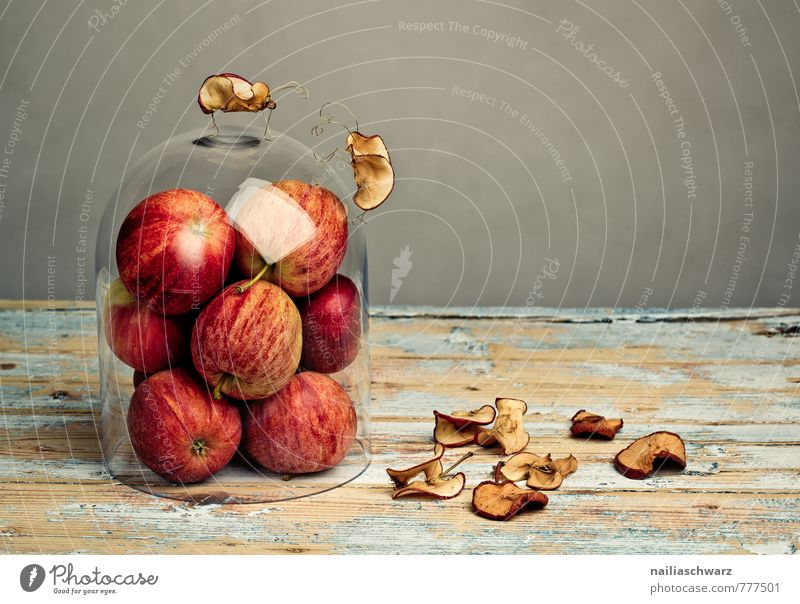 Beautiful Red Animal Natural Gray Wood Exceptional Fruit Fly Observe Communicate Cute Simple Target Attachment Apple