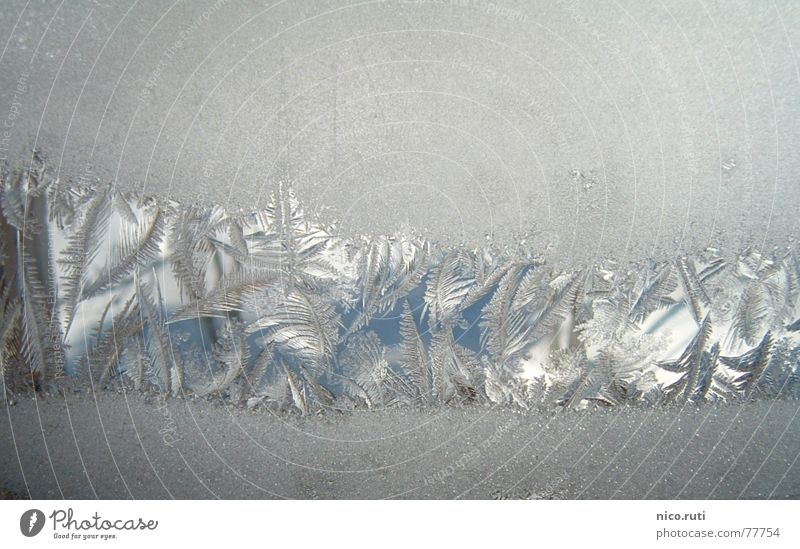 ice flowers Winter Window Cold Flower White Snow Ice Crystal structure Star (Symbol) Prongs
