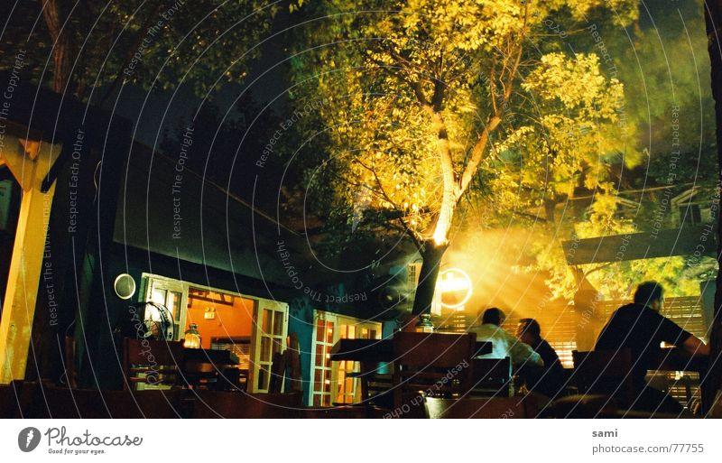 Morning Glow Tree Fog Night Restaurant Shanghai Human being Summer so much freelance glow Cheeseburger