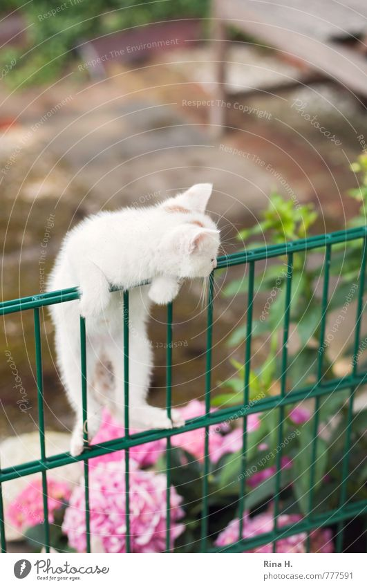 discover the world Garden Animal Cat 1 Baby animal Observe Lie Curiosity Cute Fence Discover Climbing Barrier Conquer Hydrangea Colour photo Exterior shot