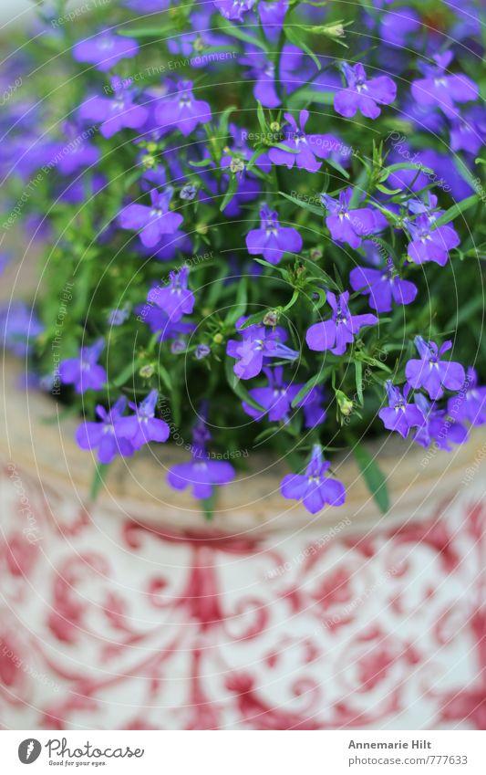 Nature Blue Plant Red Flower Landscape Living or residing Gardening