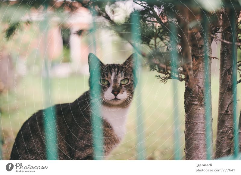 cat Pet Cat 1 Animal Wait Fence Pelt Garden Looking Colour photo Deserted Day Shallow depth of field Central perspective Animal portrait Looking into the camera