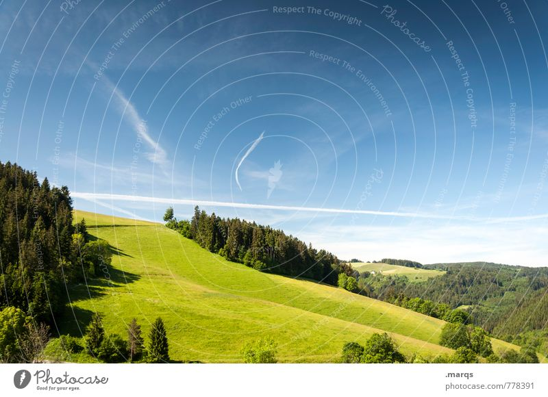 Sky Nature Summer Relaxation Forest Environment Meadow Horizon Idyll Tourism Hiking Trip Beautiful weather Hill Cloudless sky Forestry