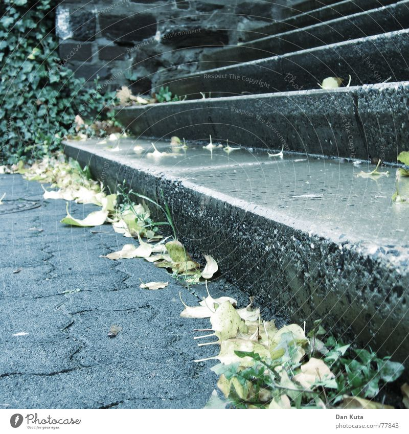 Leaf Autumn Wall (building) Walking Wet Concrete Tall Stairs Cobblestones Marble Z
