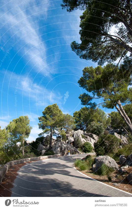 It's going up Environment Nature Landscape Plant Elements Sky Clouds Summer Beautiful weather Warmth Tree Rock Mountain Hiking Serra de Tramuntana Majorca