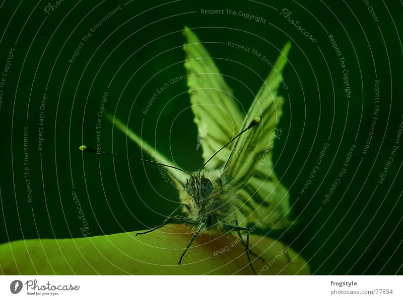 Human being Nature Green Animal Spring Together Pair of animals Fingers Esthetic Animal face Wing Insect Observe Catch Touch Butterfly