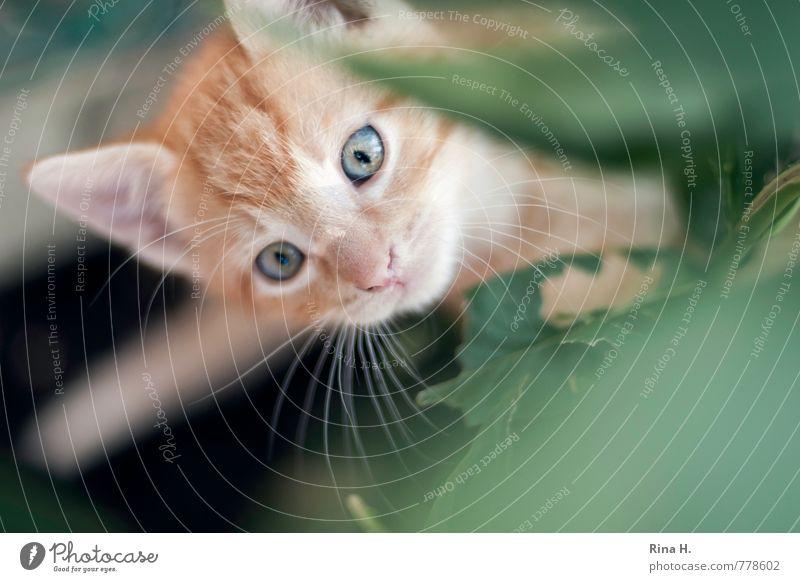 Cat Leaf Animal Baby animal Observe Cute Curiosity Pet