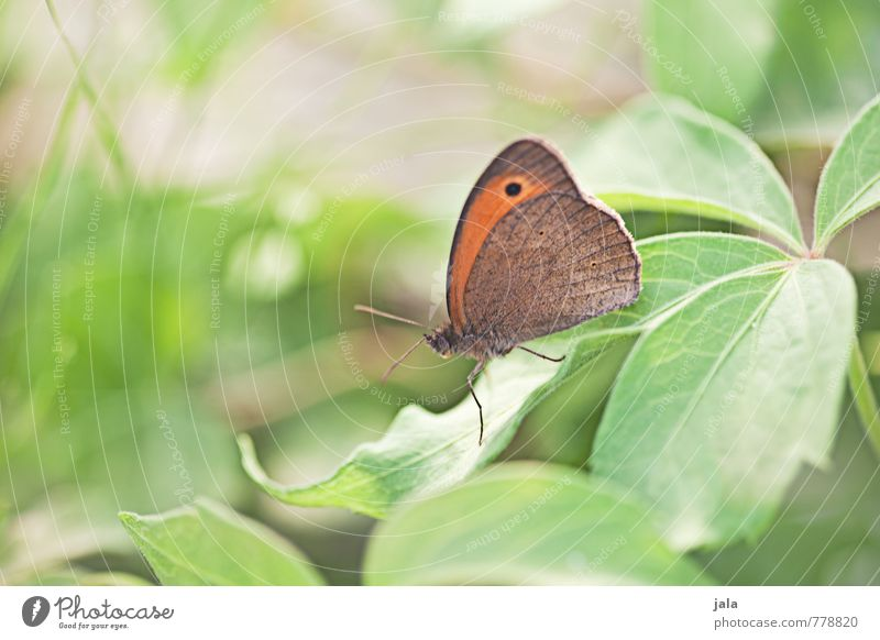 butterfly Nature Plant Animal Summer Grass Leaf Foliage plant Garden Wild animal Butterfly 1 Esthetic Elegant Free Beautiful Small Soft Exterior shot Deserted