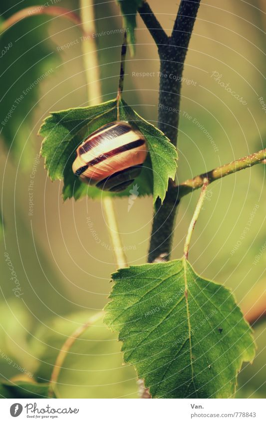 Tree house² Nature Plant Animal Spring Beautiful weather Leaf Birch tree Twig Garden Snail 1 Hang Small Green Colour photo Multicoloured Exterior shot Close-up