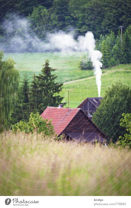 cool summer Nature Landscape Spring Summer Tree Meadow Forest House (Residential Structure) Farm Smoke Exhaust gas Smoking Fragrance Positive Calm Loneliness