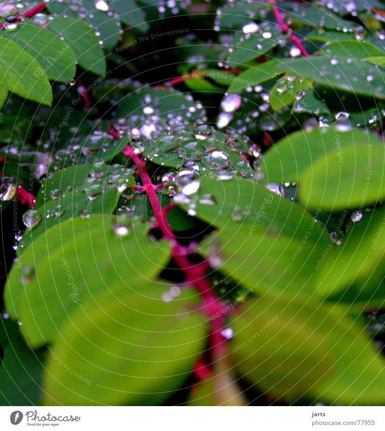 Leaf Autumn Rain Drops of water Wet