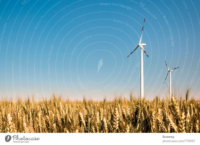 Wind Power Collector #3 Technology Energy industry Renewable energy Wind energy plant Environment Landscape Sky Cloudless sky Sunlight Spring Summer