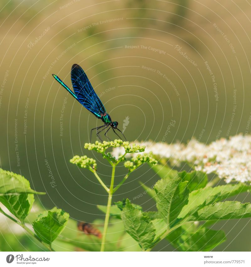 Nature Blue Animal Esthetic Insect Dragonfly Bluewing