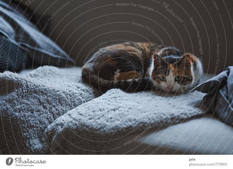 softer Living or residing Flat (apartment) Sofa Animal Pet Cat 1 To enjoy Lie Esthetic Beautiful Colour photo Interior shot Deserted Twilight Light Shadow