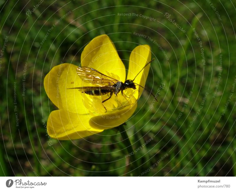 Flower Yellow Meadow Insect