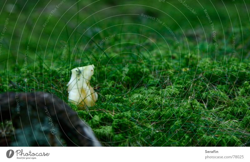 Green Loneliness Nutrition Food Apple Trash Moss Vitamin Remainder Woodground Residual waste